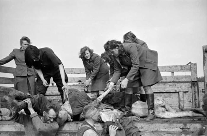 Женщины, служившие надсмотрщицами в концлагерях нацистской Германии.