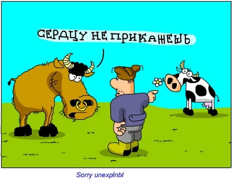 Открытки прикольные смешные про корову, картинки камина