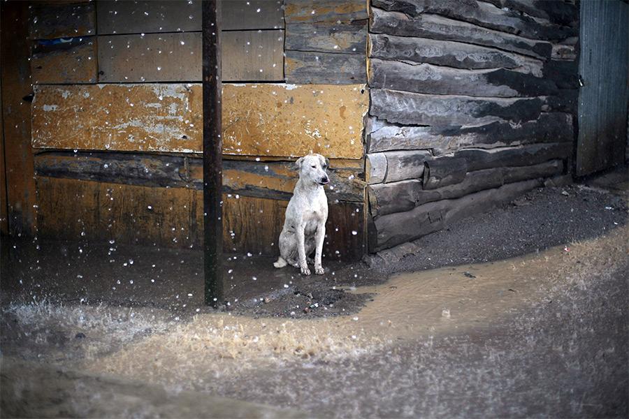 Последняя собака Живое,Полезное