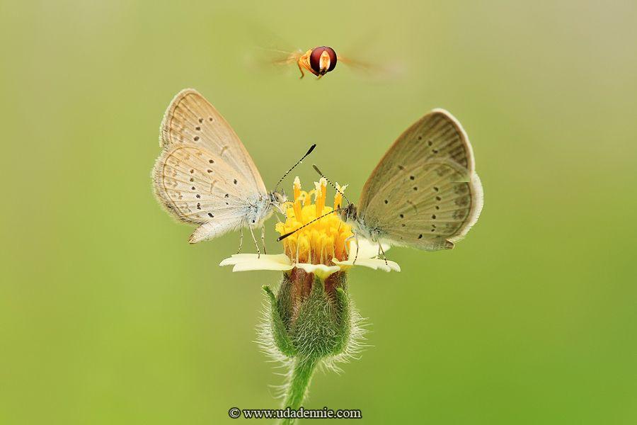 Портреты насекомых от Дэнни Уда