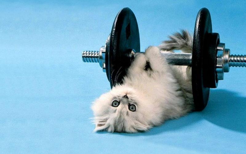 Займется с вами фитнесом.