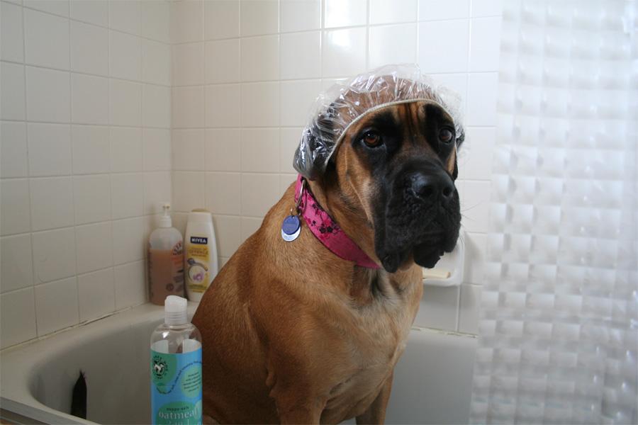 Лайфхаки для владельцев собак