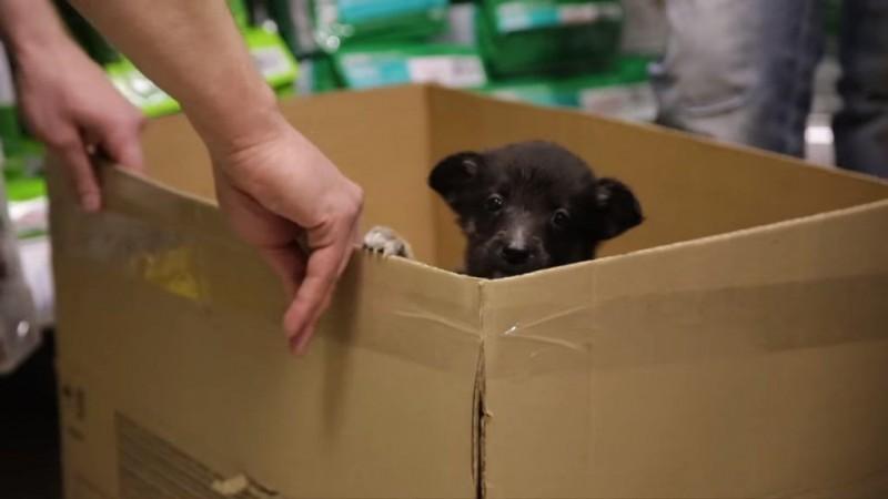 Мальчик хотел купить щенка, …