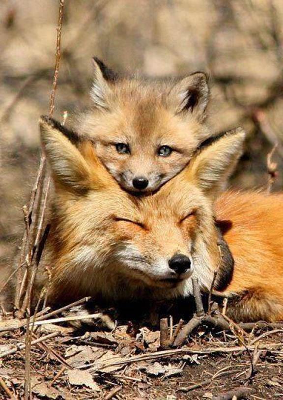 Настоящая красота мира дикой природы в фотографиях