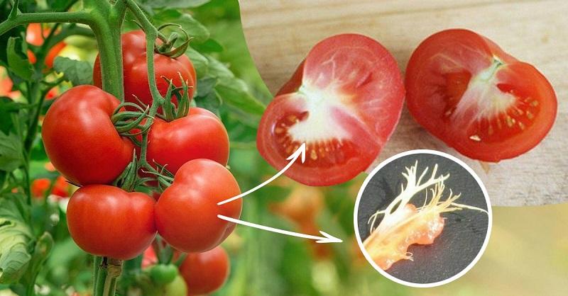 Вот почему в помидорах есть белые прожилки