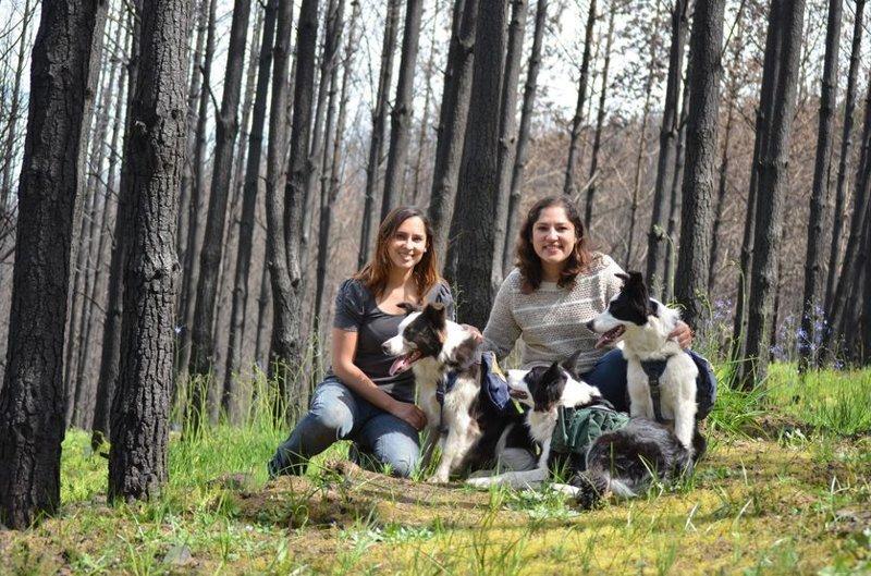 Как с помощью теннисного мячика и трёх собак восстановить сгоревший лес животные, лес, помощь, посадка, собака, собаки, спасение, чили