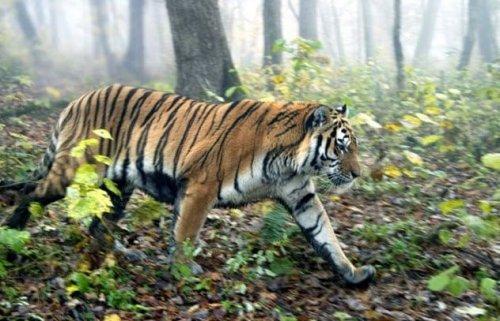 Истории животных, отомстивших браконьерам.