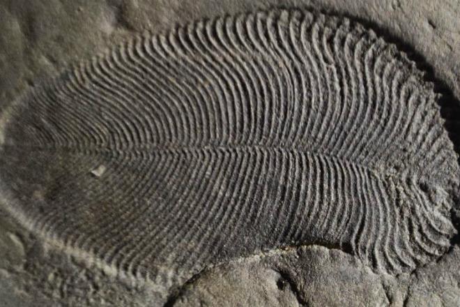 Ученые нашли следы самого древнего существа на планете