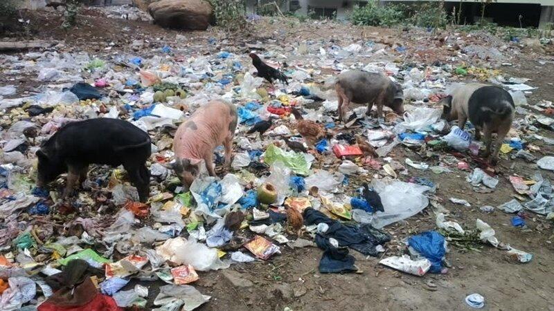 30 страшных кадров, напоминающих о том, как человек издевается над природой вымирают, животные, мусор, природа, уничтожение, человек