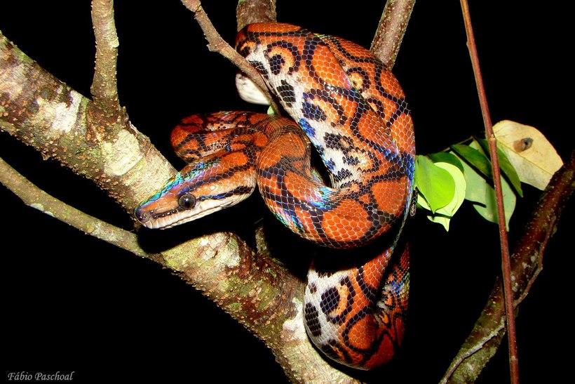 Самая красивая змея в мире