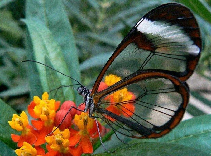 15 случаев, когда природа в своих фантазиях зашла слишком далеко