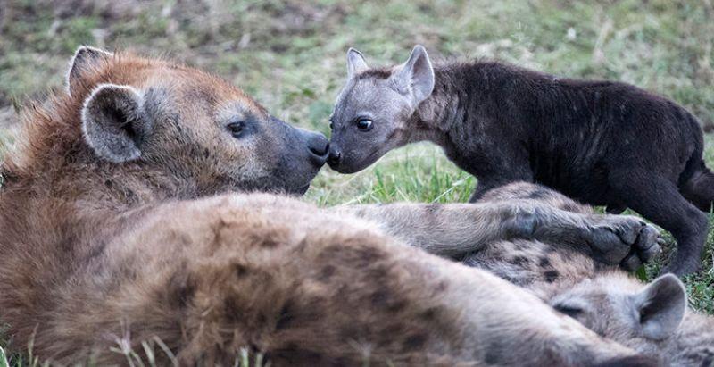 6 животных, которые умеют менять свой пол гендер,животные,жизнь,планета,природа,странности