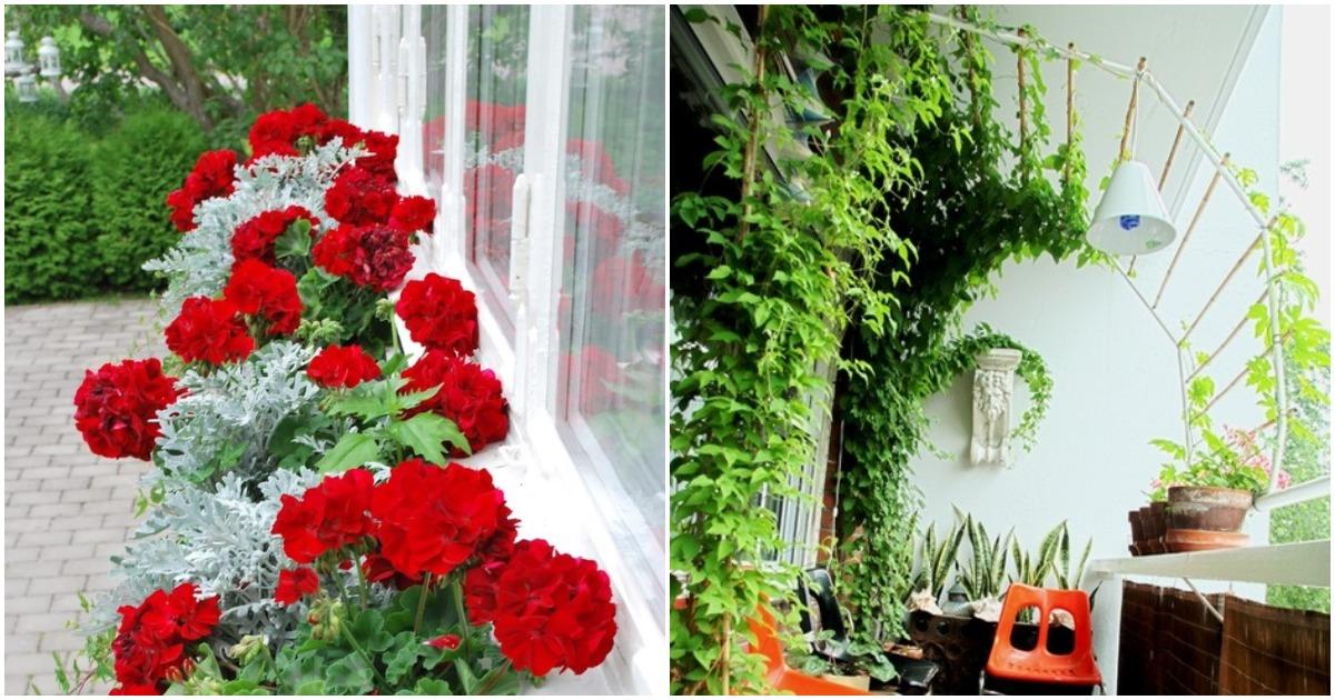 Посмотрите, как балкон или веранда могут превратиться в райское место
