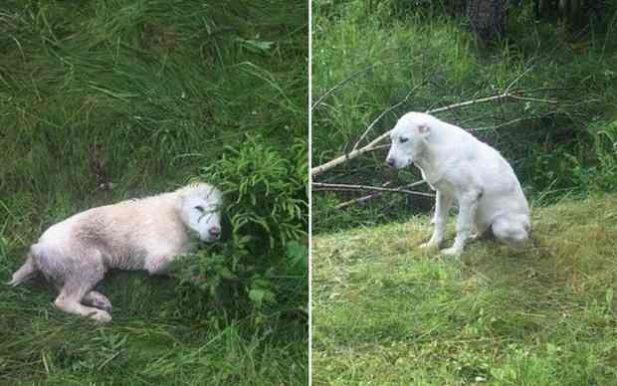 Волонтеры нашли 14 щенков алабая возле дороги. История их появления там кажется нереальной!...