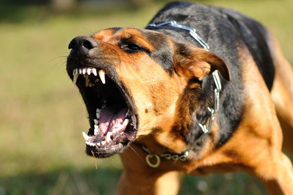 Собаки загрызают людей насме…