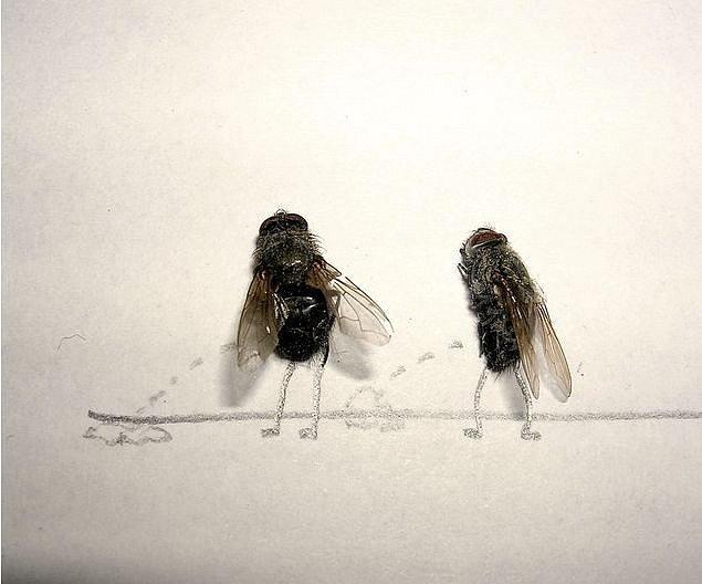 Очаровашке, смешные картинки про мух с надписями