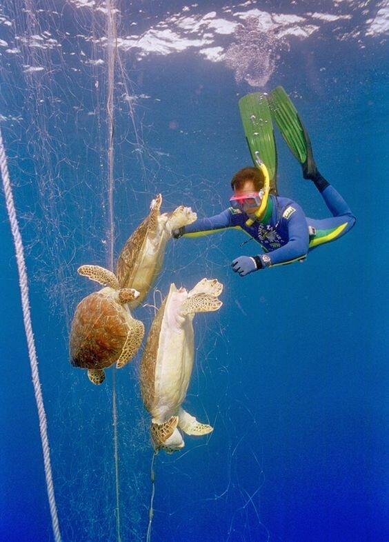 Но не только мусор учнитожает все вокруг - человеческая деятельность - рыболовство, когда сети обрываются и в них запутываются разные животные вымирают, животные, мусор, природа, уничтожение, человек