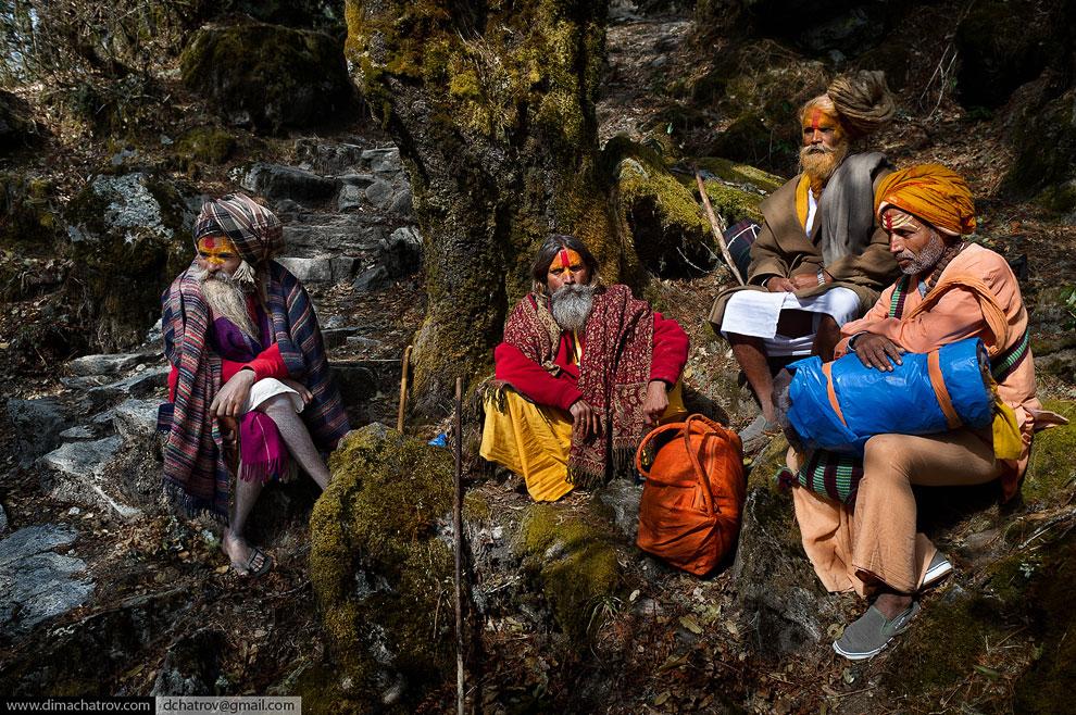 Непал, Лангтанг-трек. «Сказочный» лес на высоте 2 900 метров
