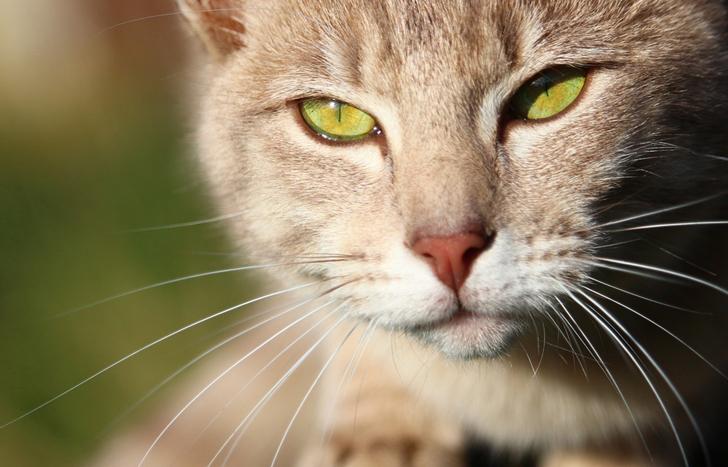Потеряла подругу, а спустя полгода, постучавшись в дверь, ко мне пришла кошка