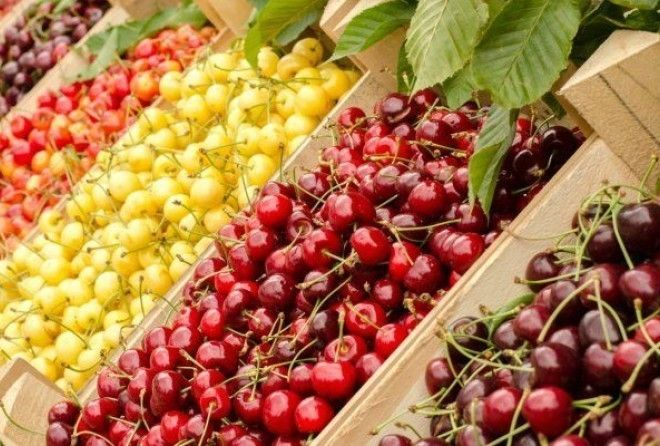 Польза вишни и черешни
