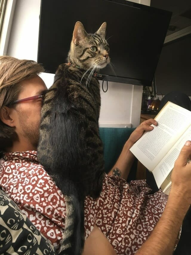 коты и их хозяева картинки будут рассмотрены