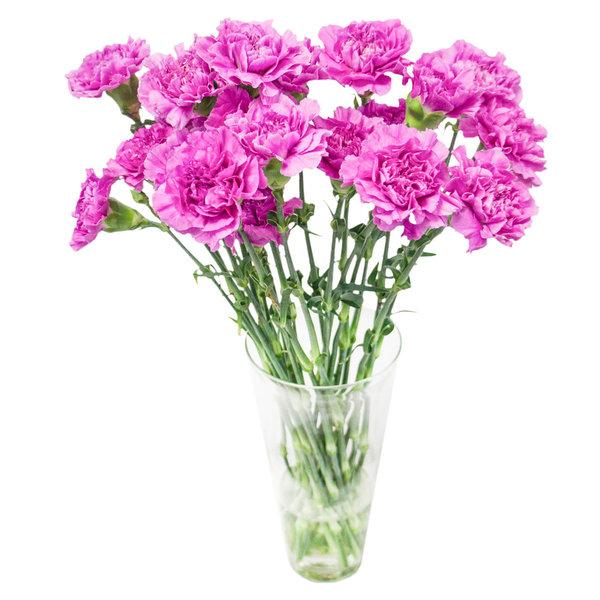 Как продлить свежесть срезанных цветов к 1 сентября?