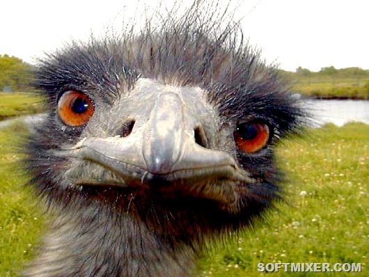 10 самых глупых животных мира