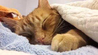 Секрет военных: как заснуть за 2 минуты