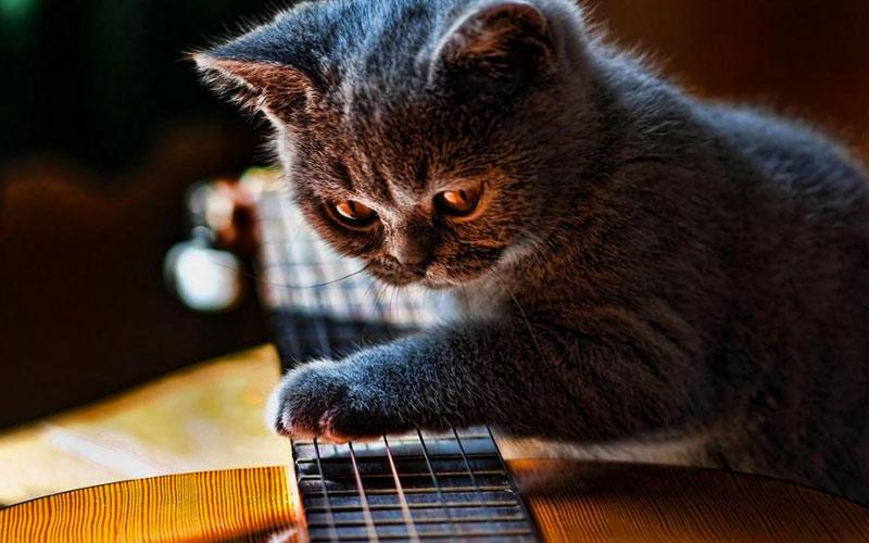Настроит любимую гитару.