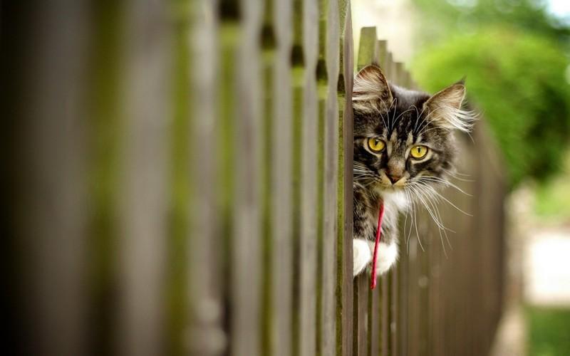 Проследит, чтобы соседи не воровали малину.