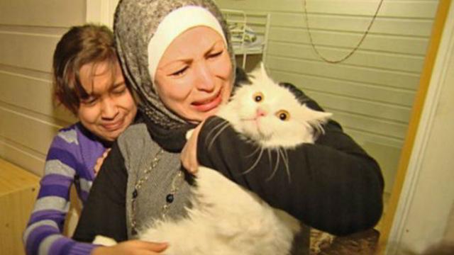 Кот, который преодолел полмира, чтобы вернуться в семью