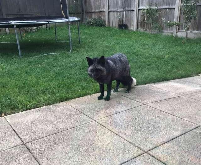 «Что за диковинный зверь у нас во дворе?!» Семья рассматривала странное животное, заглянувшее в гости