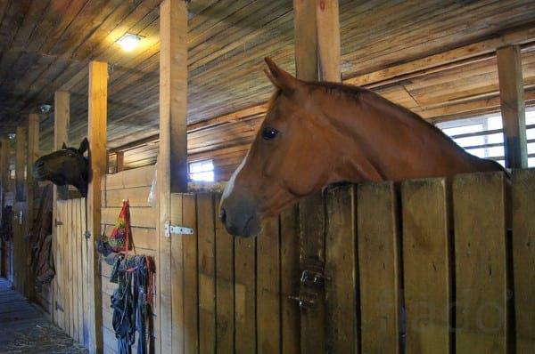 Мама на секунду оставила своего пятимесячного малыша в конюшне. То, что сделала лошадь когда ребёнок расплакался — нужно видеть!