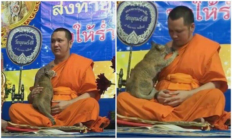 Без шансов: настырная кошка не дает буддийскому монаху молиться