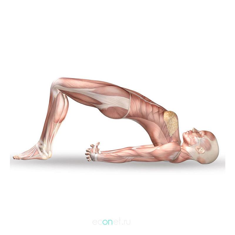 «50 «подскоков»: упражнение ПИЛАТЕСА для пояснично-крестцового сустава