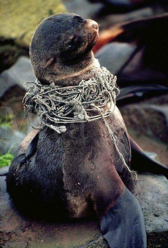Ежегодно человечество выбрасывает 275 млн тонн пластикового мусора из них  в океан попадает более 10 миллионов тонн пластиковых отходов вымирают, животные, мусор, природа, уничтожение, человек