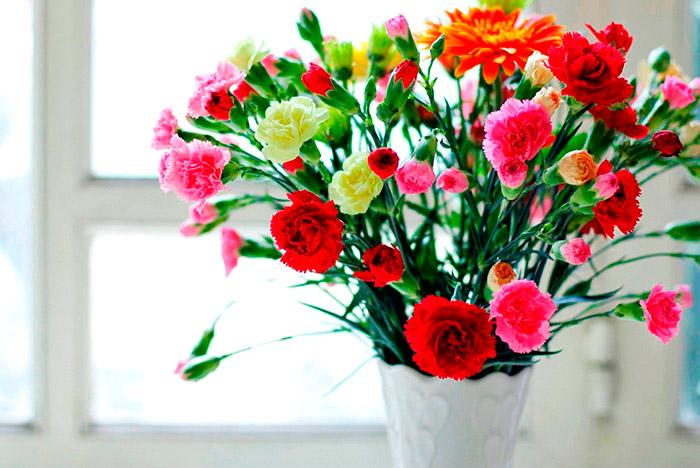Гвоздики символизируют любовь. Цветы на День Святого Валентина