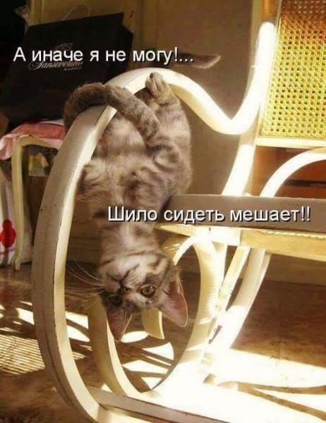 Давно не было котиков!