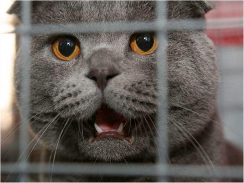 Жители Барнаула обвинили кота в краже электричества