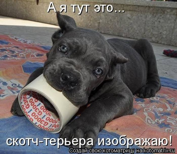 Картинки смешные с надписями про собак, прикольными