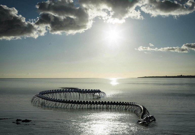 стужа фото морского змея чудовище достаточно
