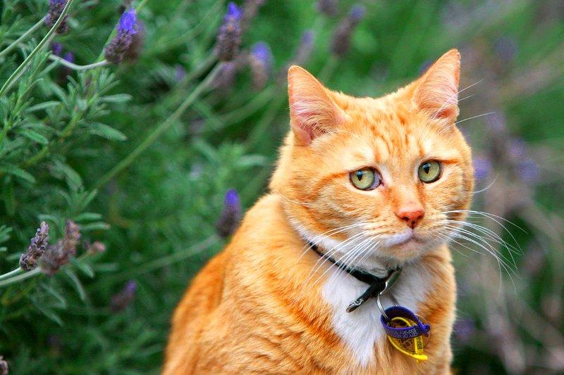 9 вещей, которые не любят кошки