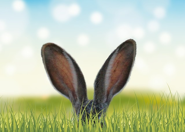 Сочинение про зайцев. — Пап, ну пап, нам вчера сочинение выдали, и мне за него учитель ничего не поставил.