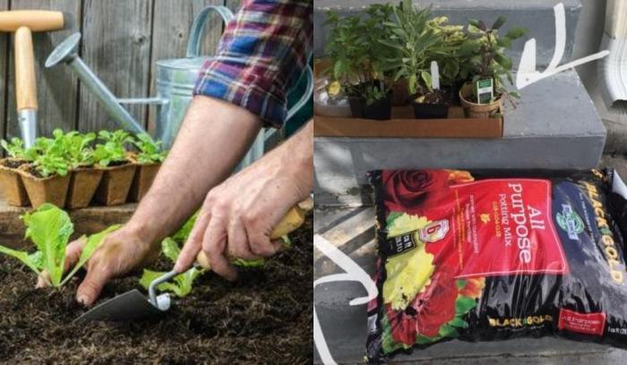 Парень захотел выращивать растения на подоконнике и показал, что из этого вышло
