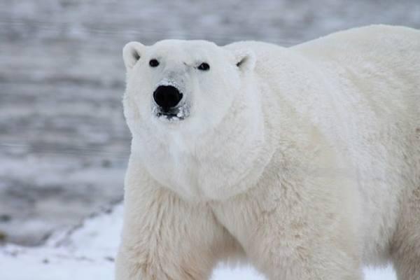Арктическая экспедиция возвр…