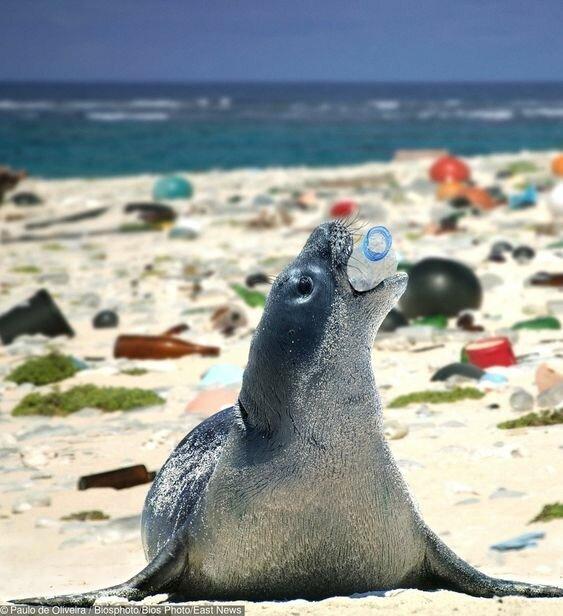 Из них только на долю Китая приходится 30% мирового мусора вымирают, животные, мусор, природа, уничтожение, человек