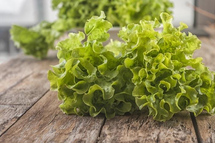 листья салата латук