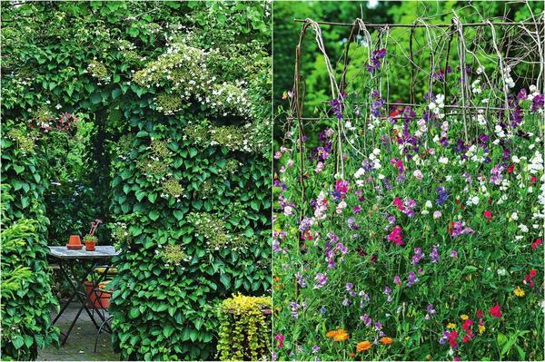 Слева: Увитая растениями беседка - благодатный оазис прохлады в знойные дни Справа: В роли основы мини-шатра выступает обычный плетень из ивовых прутьев