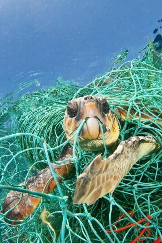 лидерами-загрязнителями вод мусором, экологи называют Индию, Таиланд и Китай, где сброс в реки и моря всего ненужного считается практически нормой вымирают, животные, мусор, природа, уничтожение, человек