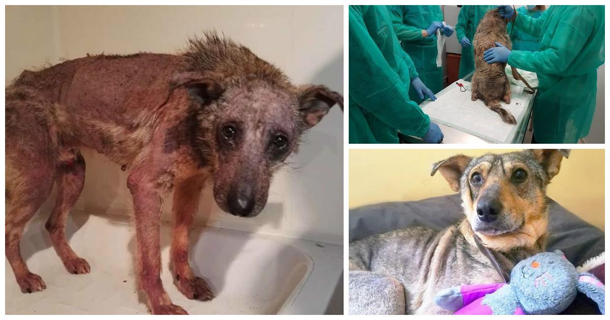 Везучий пес и история его реабилитации после смертельного приговора